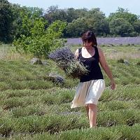 Marie cueille la lavande en Provence